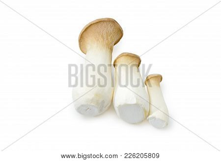 Three Fresh Cultivated Eringi Mushrooms Different Sizes, Also Known As King Oyster Mushroom, King Tr