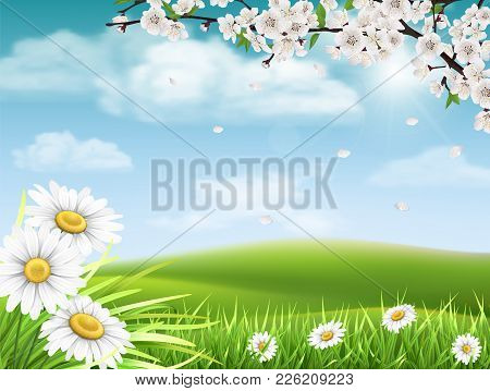 Spring Landscape With A Flowering Branch Of A Tree With Grass And Daisies In The Foreground.