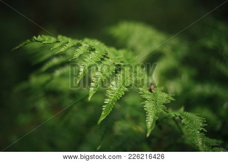 A Large Green Branch Of A Fern For Any Purpose