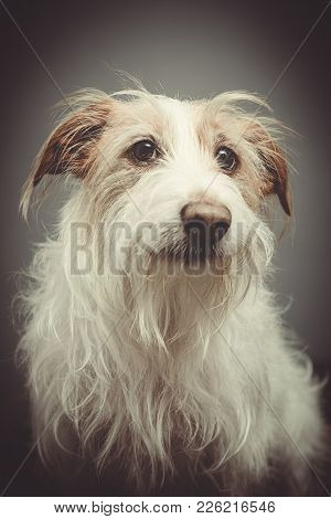 Rescue dog portrait - long haired terrier
