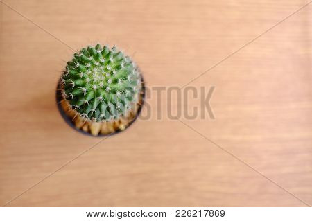 Top View Green Cactus With Thorn In A Flowerpot And Blur Wooden Table Background With Soft Light