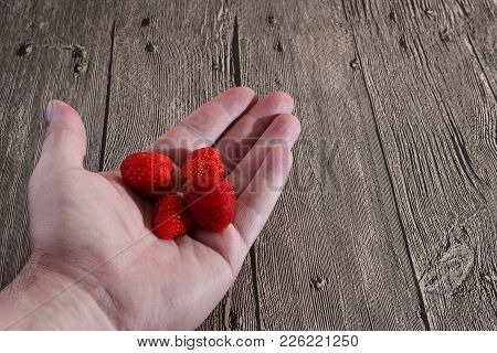 Handful Of Strawberries. Hand With Strawberry. Hand With Strawberry On Wooden Table Background