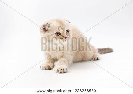 Little Kitten Isolated On White Background. Tabby Cat Baby