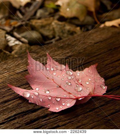Maple Leaf On A Train Track