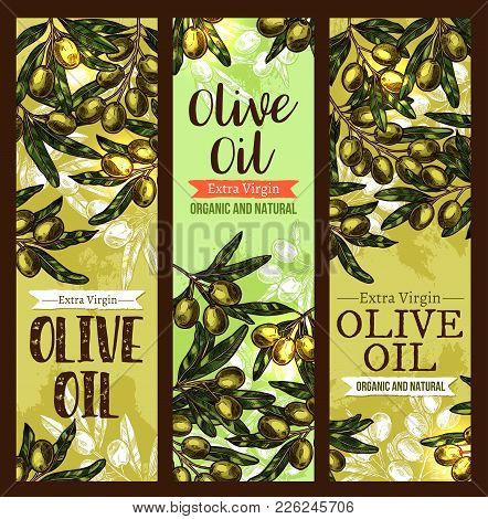 Olive Oil Extra Virgin Product Sketch Banners Design Template. Vector Green Olives For Organic Oil O