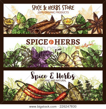 Herbs And Spices Farm Market Store Banners Design Template. Vector Organic Cinnamon, Thyme Or Rosema