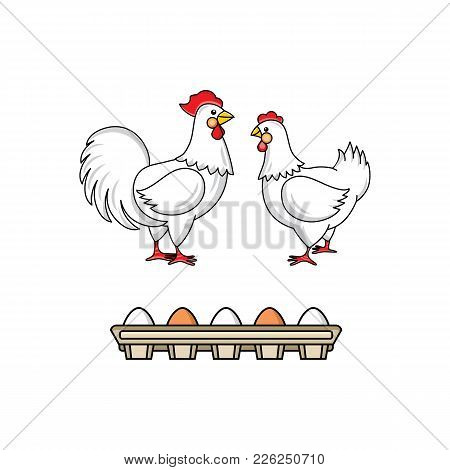 Vector Flat Hand Drawn White Hen Chicken, Rooster, Cock With Red Crest, Eggs In Cardboard Box Set. I