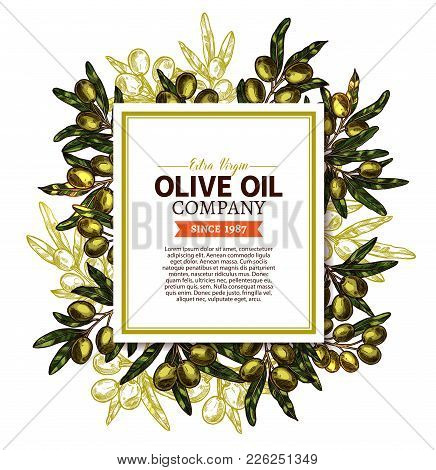 Olive Oil Company Sketch Information Poster Or Extra Virgin Olive Oil Product Bottle Package Tag Or