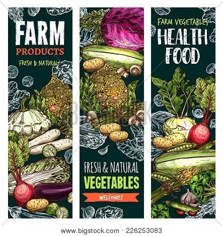 Vegetables And Fresh Veggies Farm Market Healthy Food Sketch Banners. Vector Natural Organic Product