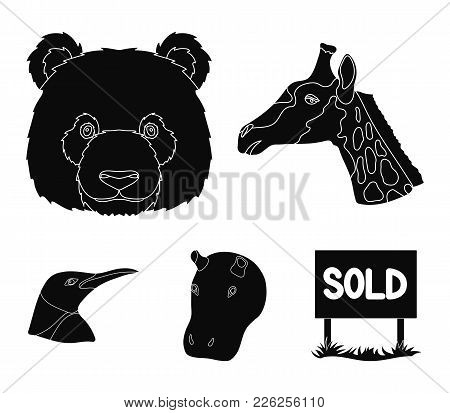 Panda, Giraffe, Hippopotamus, Penguin, Realistic Animals Set Collection Icons In Black Style Vector