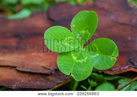 Horizontal Macro Photo Of A Bright Green 4-leaf Clover On The Right With A Green And Brown Backgroun