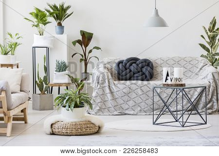 Natural Living Room Interior With Plants