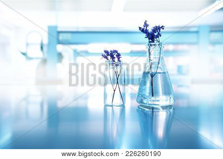 Purple Flower With Glass Flask And Vial In Experimental Biological Cosmetic Health Science Blue Labo