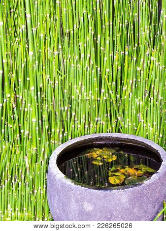 Japanese Stone Basin With Floating Lily Pads And Bamboo Reflections. Outdoor Stone Basin In Tokyo Is