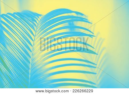 Close Up Leaf Of A Palm Tree With A Shadow Toned In Pastel Colors Of Yellow And Blue