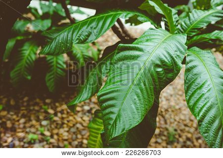 Low Key Dark Lighting Nature Background, Green Leaves In Natural Light And Shadow, Symbolic Of Peace