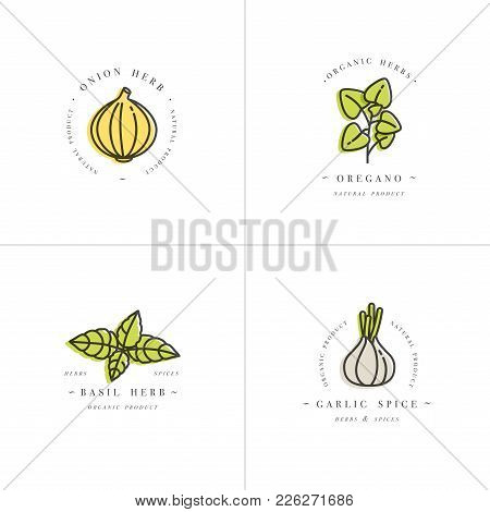 Vector Set Design Colorful Templates Logo And Emblems - Herbs And Spices. Italian Herb Icon. Logos I