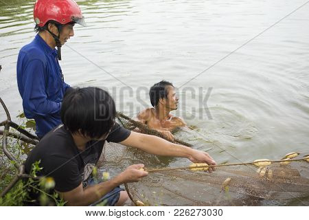 Hung Yen, Vietnam - July 26, 2015: Farmers Harvesting Fish From Pond In Hung Yen