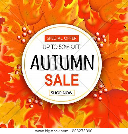 Autumn Sale Text Banner With Colorful Seasonal Fall Leaves  Background For Shopping Discount Promoti
