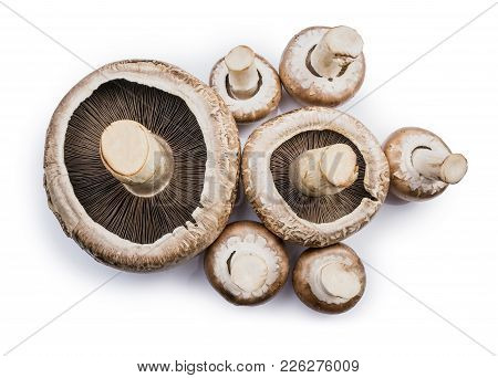 Group Of Fresh Brown Portabello Mushroom Isolated On White Background.
