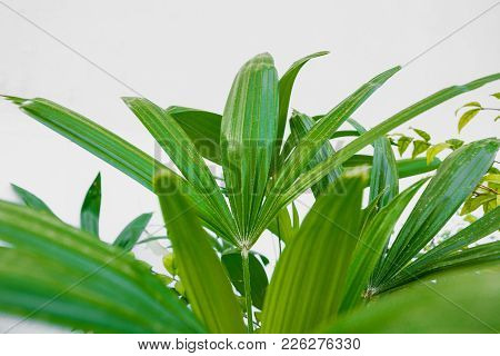 Green Palm Leaf On A White Background