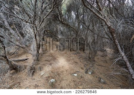 Small path between dead trees