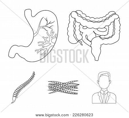 Intestines, Stomach, Muscles, Spine. Organs Set Collection Icons In Outline Style Vector Symbol Stoc