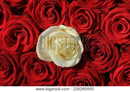 Single White Rose And Red Roses In A Bridal Bouquet