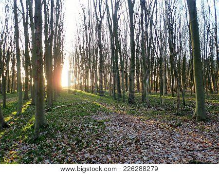 Sunrise In Woodland, Philipshill Wood, Chorleywood, Hertfordshire, Uk