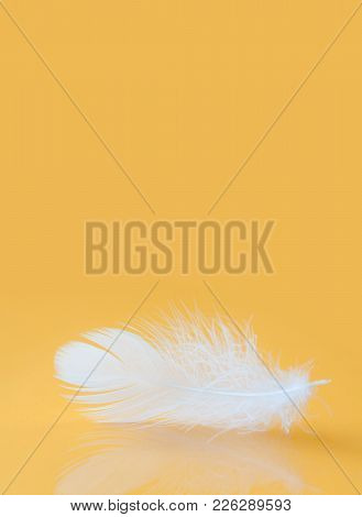 Fluffy White Feather Texture Macro View. Luxury Softness Concept. Bird Plumage Feathering On Yellow