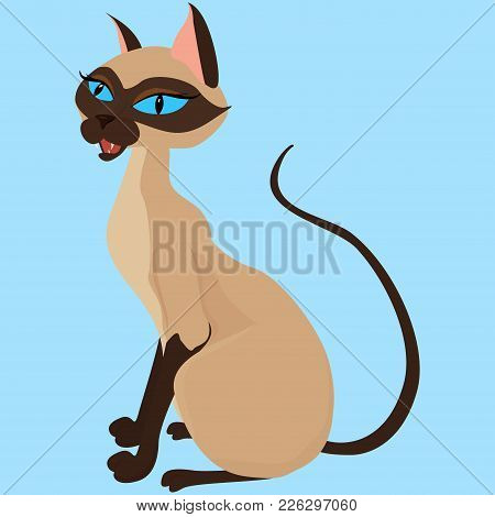 Siamese Cat Sitting Isolated On Blue Background