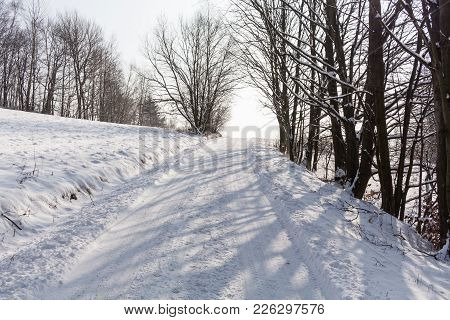 Winter Background. Frosty Branches Of The Winter Trees Against Blue Sky -forest Winter Landscape Sce