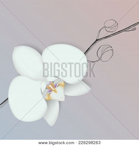 Vector Orchid Flower. Realistic Blooming Flower On A Hand Drawing Branch. Isolated Orchid. Spring Ti