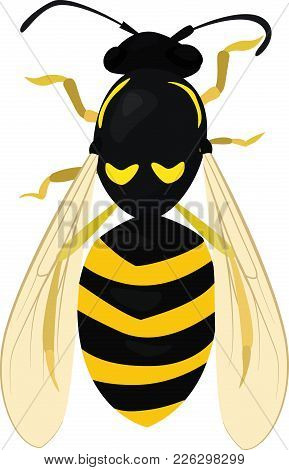 Cartoon Sketch Of Wasp. Insect Isolated On White. Bee. Vector Illustration