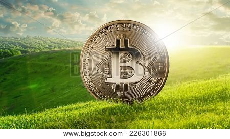 Gold coin bitcoin against the background of a green field, eco crypto and ICO concept