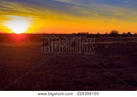 A Pasture Full Of Cows Grazing As The Sun Sets In Fairmont, Oklahoma 2018