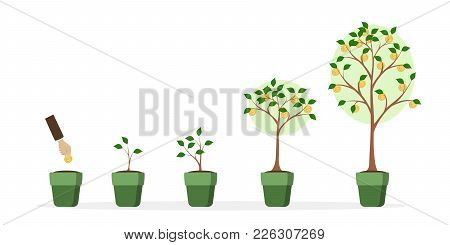 Money Tree Growth. Hand Putting Coin. Tree With Money Golden Coins.