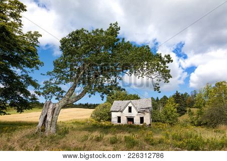 Derelict house and old tree in New Brunswick, Canada.
