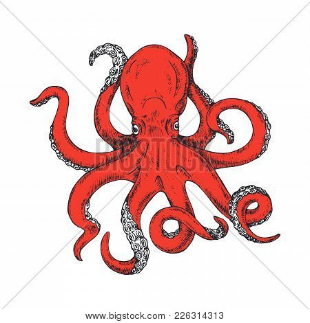 Octopus. Vector Illustration Of Colored Octopus Hand Drawn, Vintage. Kraken Tattoo Or Print For T-sh