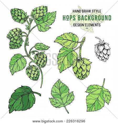 Sketches Of Hop Plant, Hop On A Branch With Leaves In Engraving Style.