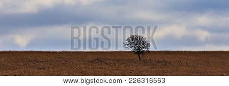 Lone Tree Stands On A Hill Covered With Golden Yellow Tall Grass Within The Tallgrass Prairie Preser
