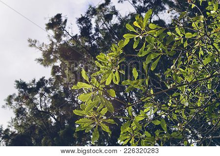 Green And Yellowish Foliage In A Sunny Afternoon