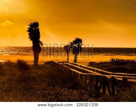 Sunset On The Beach Of Tarifa, Costa De La Luz, Spain, With Palmtrees