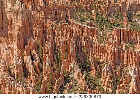 Colorful Hoodoos In Bryce Canyon In Utah