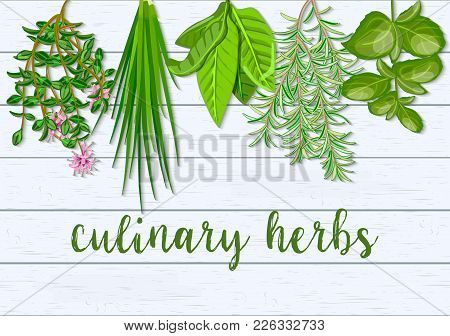 Wooden Scandinavian Background Of Hanging Farm Fresh Culinary Hanging Herbs. Greenery Basil, Rosemar