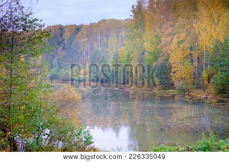Beautiful Forest Landscape In Autumn. Colorful Thick Of The Forest, In The Forest Is The River Into