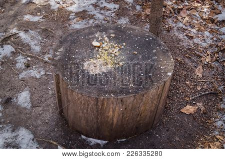 Stump And Feed For Birds. Bird Feeder On The Stump