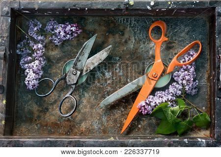 Black Metal Scissors Rough Work And Long Orange Scissors Opposite Each Other On A Rusty Background S