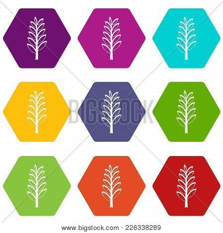 Spica Icon Set Many Color Hexahedron Isolated On White Vector Illustration
