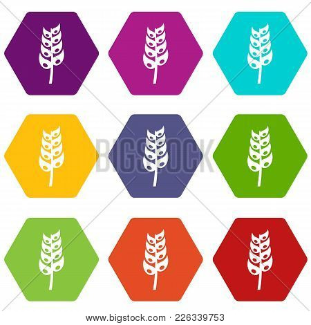 Ripe Spica Icon Set Many Color Hexahedron Isolated On White Vector Illustration